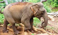 Enabling locals to release their elephants from work to live a better life
