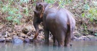 Sanctuary dedicated to letting elephants live in a natural habitat