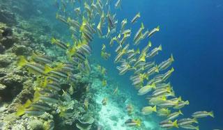 Ko Chang Diving & Snorkelling