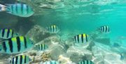 A snorkelling trip to Koh Rang is a must!