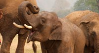 Join in the care and rehabilitation of rescued & 'damaged' elephants