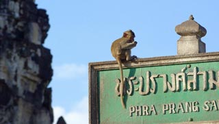 Lopburi's most famous landmark - The Monkey Temple