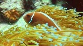 Some stunning dive and snorkelling sites around Ko Pha Ngan