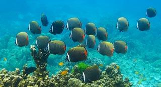 Longer boat journeys but the same spectacular dive sites