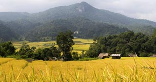 Thailand's highest mountain, cloud forests, waterfalls, Hill Tribes & picturesque Chedis